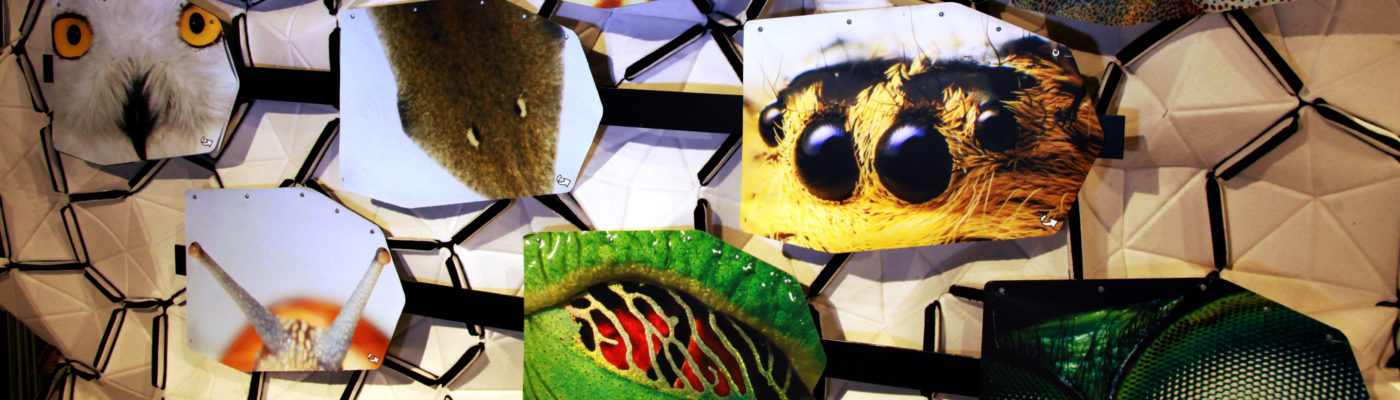 eyes in senses room. Animal's. Senses. Natural Science. Zoology. Science exhibition. Explorium